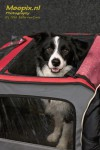 A border collie posing in a cart