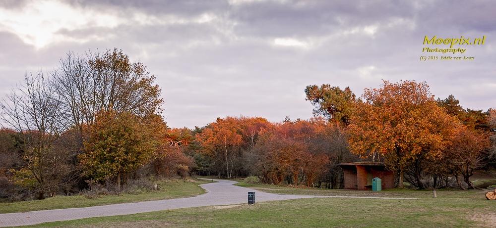Kleurrijke foto van een landschap met herfstkleuren en een dramatische lucht